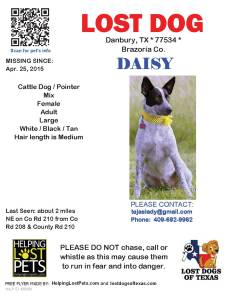 Flyer for Daisy