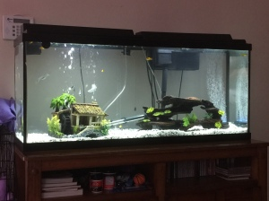New tank configuration (so far)