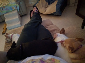 Zoe, Gypsy, Mimi & Dusty resting in my lap.